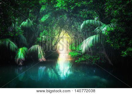 Tropical Lake In Mangrove Rain Forest. Sri Lanka