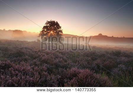 misty summer sunrise on heathland Gelderland Netherlands