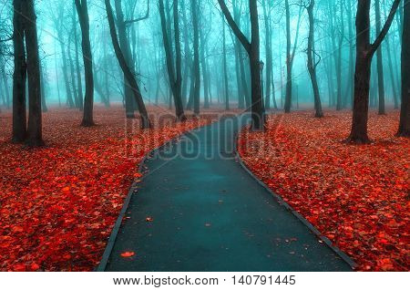 Autumn nature -misty autumn view of autumn park alley in dense fog - foggy autumn landscape with bare autumn trees and orange fallen leaves. Autumn deserted alley in dense autumn fog. poster