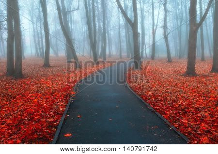 Autumn nature -misty autumn view of autumn park alley in dense fog. Foggy autumn landscape with bare autumn trees and orange fallen leaves. Autumn deserted alley in dense autumn fog.