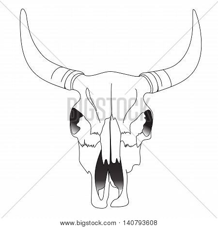 Bull skull, cow skull, animal skull, cattle skull, bison skull, desert skull, tattoo skull, halloween skull. Vector.
