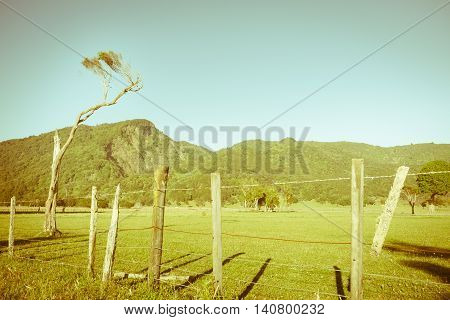 Retro effect New Zealand rual landscape flat land leading to hills beyond fence with lone scraggy tree.