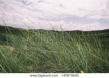 Beach and Sand Dune.Beach and sand dune covered with Marram Grass, Germany, Sylt, List.