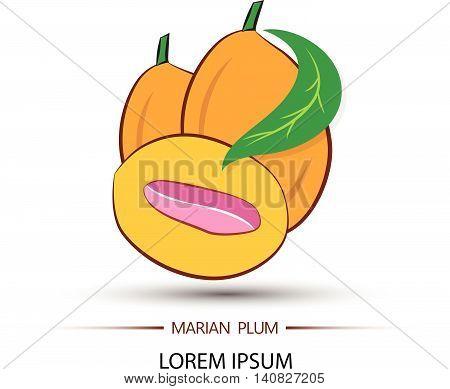 Marian Plum Or Maprang (thai Fruit) Vector