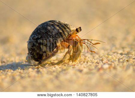 Funny Crab Sand Scene