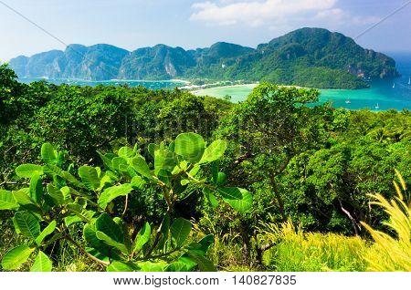 Idyllic Panorama Palm Island
