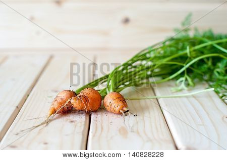 Organic Baby Carrots In The Ground Stained With Stems