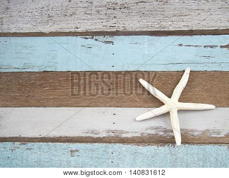 Star fish and sea animal on wooden background