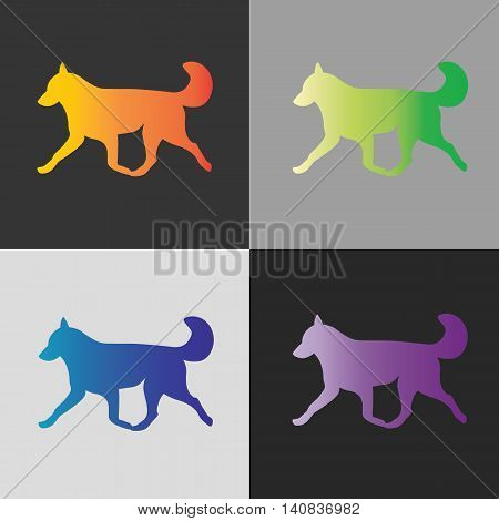 Four dogs running huskies on gray background.