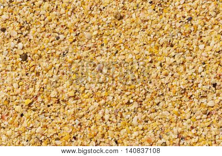 Light brown shelly sand background
