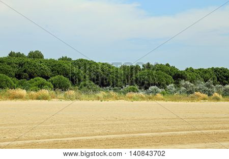 Italian Maquis Shrubland With Sand