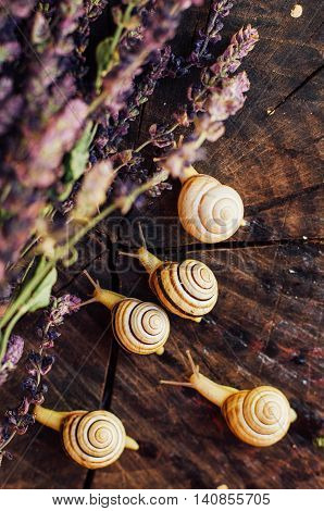 Yellow snails walking around the garden. Snail on the tree in the garden. Snail gliding on the wet wooden texture. snail Catch the stumpsnailbeautif ul snailsnail on the woodsingle snail
