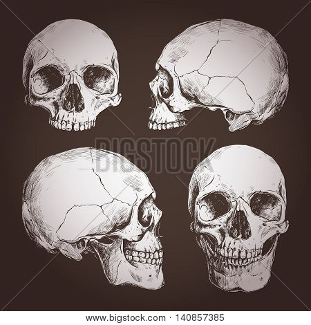 Drawing Of Human Skulls From Different Angles On Chalkboard
