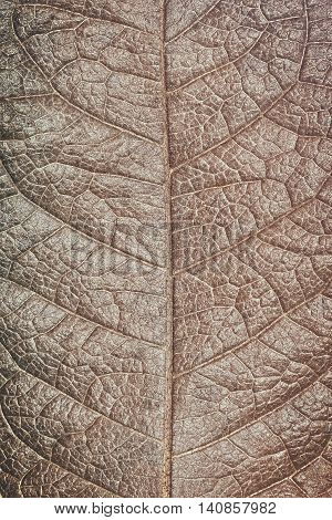 Structure of grunge dry leaf texture background Macro.