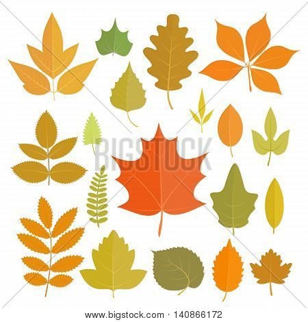 Set of yellow autumn leaves icons isolated on white background. Vector stock illustration.