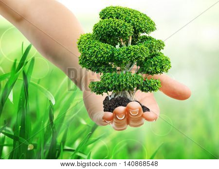Female hand holding green tree on blurred natural background