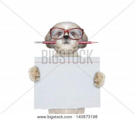 Cute dog student at school holding piece of paper -- isolated on white