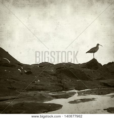 textured old paper background with slender-billed curlew birds poster