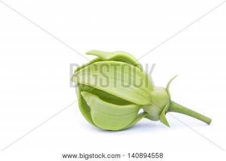 Green Ylang-ylang Flower On White Background