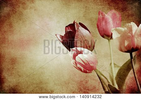 colorful blooming tulips on added beige paper texture