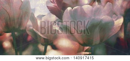 tulips toned with added different textures mourning card concept photo