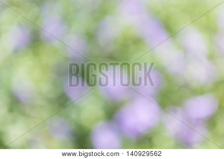Blurred bright flowers field with green color from grass in sunshine day.