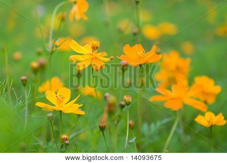 orange flowers (Forest of Flowers )