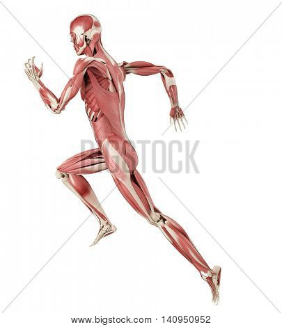 3d rendered medically accurate illustration of a runners muscles
