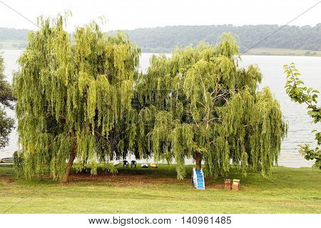weeping willow, il Bracciano lake - Italy