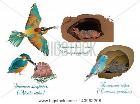 It is illustration of European beautiful birds with their offspring.