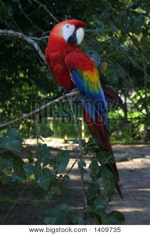 Multi Colour Parrot