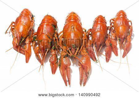 Fresh boiled red crayfish in a row with herbs isolated on white background with shadows.