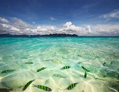 Transparent sea water with fish and blue sky with clouds poster