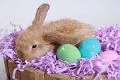 Another adorable easter bunny with colorful eggs poster
