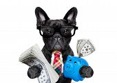 boss accountant rich french bulldog saving dollars and money with piggy bank or moneybox with glasses and tie isolated on white background poster