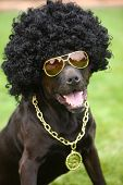 Dog wearing funny costume