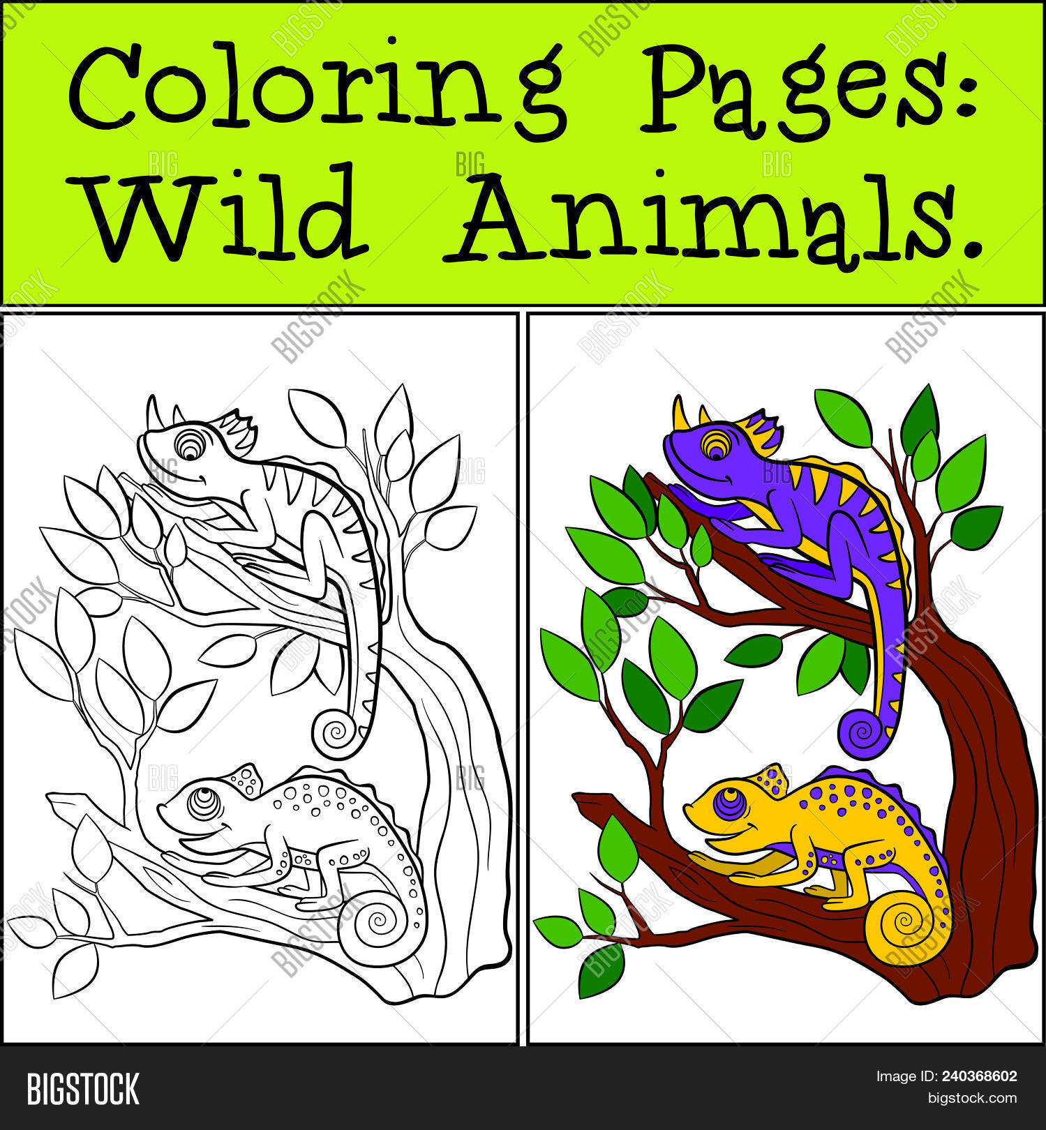Coloring Pages: Wild Vector & Photo (Free Trial)   Bigstock