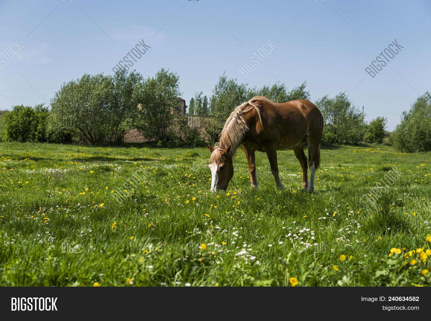 Alone Brown Horse On Image Photo Free Trial Bigstock