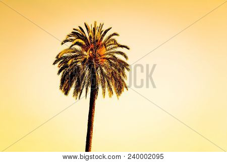 Vintage Single Tropical Luxury Paradise Beach Palm Summer Sky. Huge Lonely Palm At Foreign Holiday C