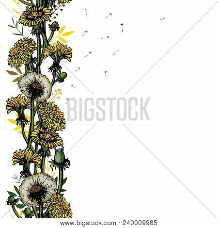 Vector Illustration Seamless Brush With Dandelions, Leaves, Flower Meadow. Summer Flower Natural Sea