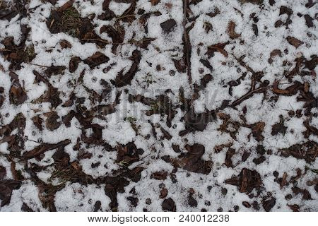 Dull Fallen Leaves Covered With Snow From Above
