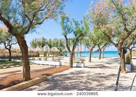 Spiaggia Terme, Apulia, Italy - Trees And Sunshades At The Beach