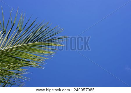 Green Palm Tree On Blue Sky Background. Single Palm Leaf Banner Template With Place For Text. Tropic