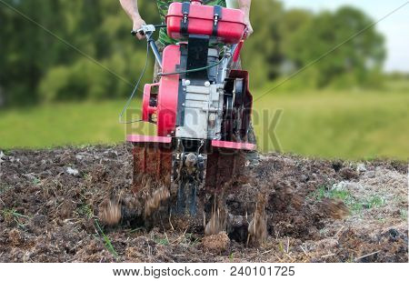 Plowing The Potato Field With A Red Cultivator. Spring Work In The Garden.