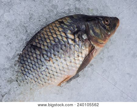 Frozen Fish On Ice. Storage And Freezing Of Products