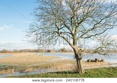 Whimsically Shaped Tree In The Foreground Of A Flooded Polder In The Netherlands.