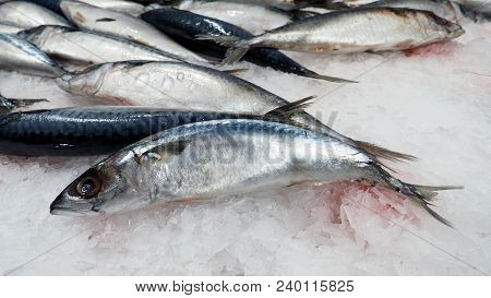 Raw clean and fresh of japanese saba fish on cold ice for healthy food. poster
