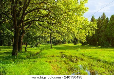 Spring Landscape. Green Park Trees And Flooded Spring Lawn In The Park In Sunny Weather. Colorful Sp