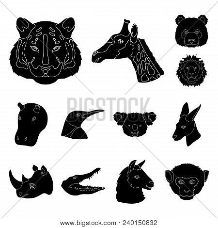 Wild Animal Black Icons In Set Collection For Design. Mammal And Bird Vector Symbol Stock  Illustrat