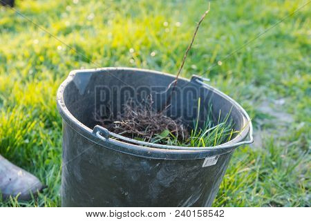 Dig Up The Weed. Dig Out The Grass. Bad Grass.